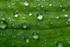 Folhas verdes da mola e do verão com imagem do macro dos waterdrops Fotografia de Stock