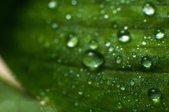 Folhas verdes da mola e do verão com imagem do macro dos waterdrops Foto de Stock Royalty Free