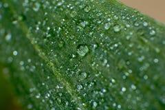 Folhas verdes da mola e do verão com imagem do macro dos waterdrops Fotos de Stock Royalty Free