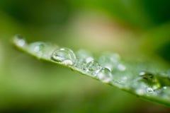 Folhas verdes da mola e do verão com imagem do macro dos waterdrops Fotografia de Stock Royalty Free