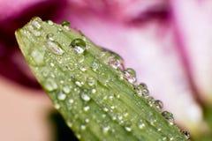 Folhas verdes da mola e do verão com imagem do macro dos waterdrops Fotos de Stock