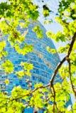 Folhas verdes da mola e Torre Agbar em Barcelona Foto de Stock Royalty Free