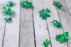 Folhas verdes da mola em um fundo de madeira Fotografia de Stock Royalty Free
