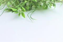 Folhas verdes da mola no fundo branco Fotos de Stock