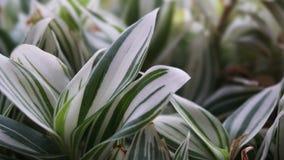 Folhas verdes da planta que crescem - folhas de plantas internas imagem de stock royalty free