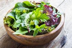 Folhas verdes da salada misturada Foto de Stock Royalty Free