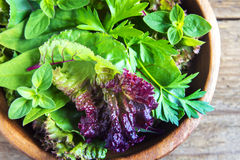 Folhas verdes da salada misturada Fotografia de Stock