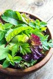 Folhas verdes da salada misturada Imagens de Stock Royalty Free