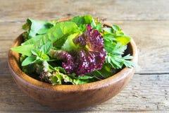 Folhas verdes da salada misturada Foto de Stock