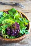 Folhas verdes da salada misturada Fotos de Stock Royalty Free