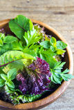 Folhas verdes da salada misturada Fotos de Stock