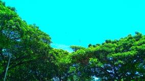 Folhas verdes verdes das árvores Imagem de Stock