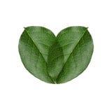 Folhas verdes do coração Imagem de Stock Royalty Free