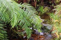 Folhas verdes do fern Fotos de Stock
