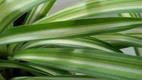 Folhas verdes e do branco Fotografia de Stock
