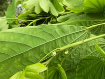 Folhas verdes e textura imagens de stock royalty free