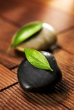 Folhas verdes em pabbles pretos Imagem de Stock Royalty Free