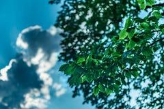 Folhas verdes em um dia de verão brilhante, contra um fundo do bokeh do céu, das nuvens, e da luz solar, Sleepy Hollow, do norte  fotos de stock