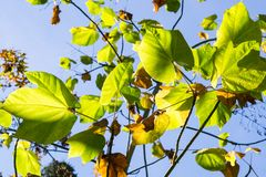 Folhas verdes em um fundo do céu iluminado pelo sol, Califórnia fotos de stock