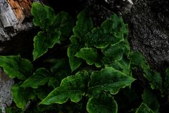 Folhas verdes entre madeiras e rochas fotos de stock royalty free
