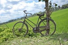 Folhas verdes frescas com gotas de orvalho foto de stock royalty free