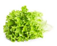 Folhas verdes frescas da alface Fotos de Stock