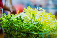 Folhas verdes frescas da rúcula imagens de stock royalty free