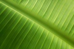 Folhas verdes, fundo da textura foto de stock