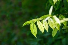 folhas verdes, fundo verde Fotos de Stock Royalty Free