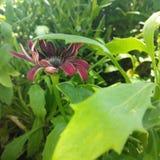 Folhas verdes lindos com contraste agradável das pétalas fotos de stock royalty free