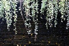 Folhas verdes na cachoeira da parede Fim acima imagens de stock