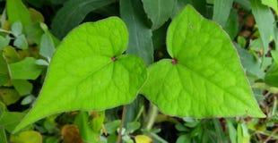 Folhas verdes na estação de mola fotos de stock royalty free