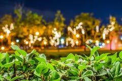 Folhas verdes na frente do fundo borrado de Bokeh fotografia de stock