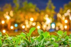 Folhas verdes na frente do fundo borrado de Bokeh foto de stock