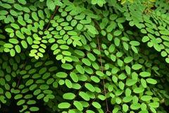 Folhas verdes naturais no jardim bonito e que refresca em um dia de relaxamento fotos de stock