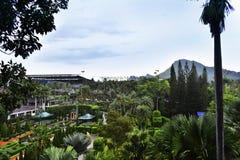 Folhas verdes naturais no jardim bonito e que refresca em um dia de relaxamento imagens de stock royalty free
