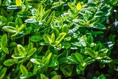 Folhas verdes, natureza bonita fotografia de stock