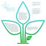 Folhas verdes no branco Imagens de Stock