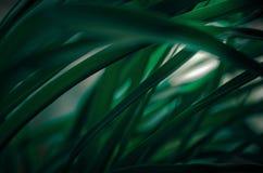 Folhas verdes no close up diagonal do arrangemente Fotografia de Stock