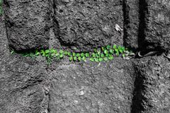 Folhas verdes no fundo de pedra áspero preto e branco do assoalho fotos de stock