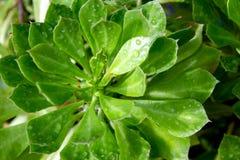 Folhas verdes no fundo do jardim imagem de stock