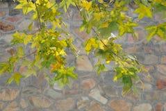 Folhas verdes no inverno Imagens de Stock