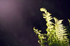 Folhas verdes novas de uma samambaia, crescendo no meio da escuridão imagens de stock