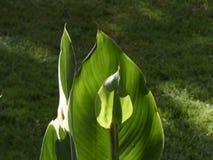 Folhas verdes pequenas iluminadas com o sol da manhã imagens de stock