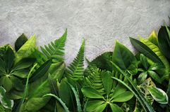 Folhas verdes tropicais do fundo exótico das plantas foto de stock royalty free