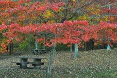 Folhas vermelhas Fotografia de Stock Royalty Free