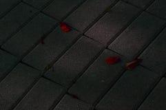 Folhas vermelhas Imagem de Stock