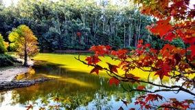 Folhas vermelhas Fotos de Stock Royalty Free