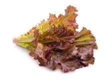Folhas vermelhas da alface Imagem de Stock Royalty Free