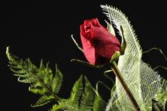 Folhas vermelhas de Rosa e de verde Fotos de Stock